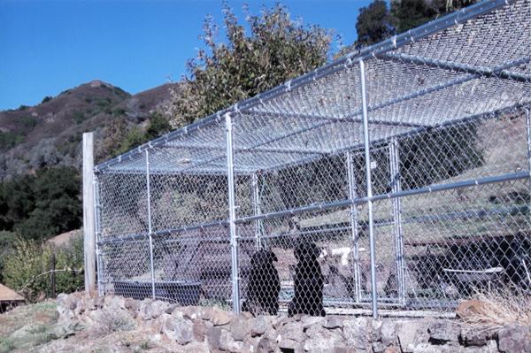 Chain Link Coggins Fence